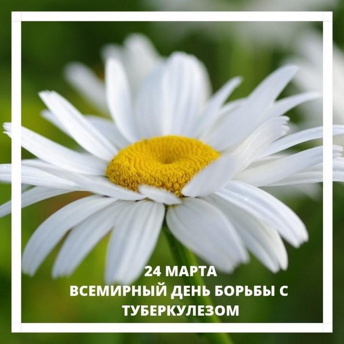24marta-romashka-site